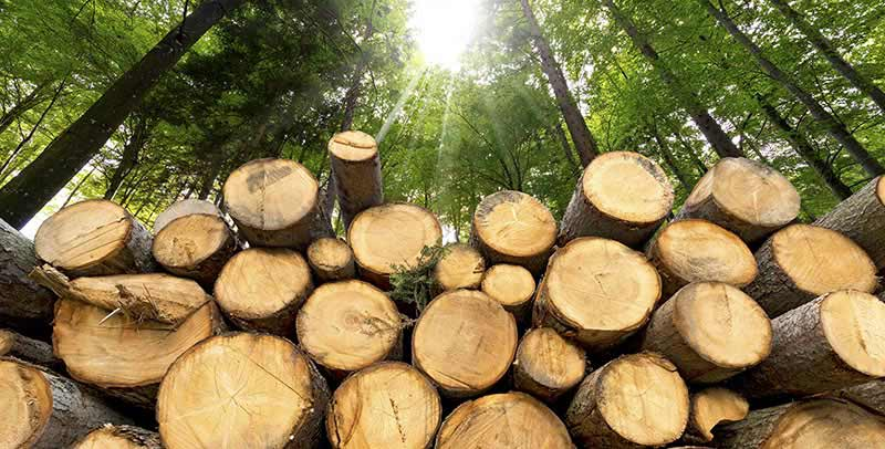 Viscose - Trees cut down in the forest